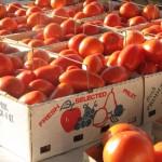 Fresh Michigan tomatoes